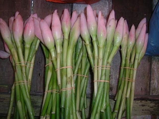 Batang Dan Kuncup Bunga Kecombrang Sayuran Tanaman Tanaman Asli