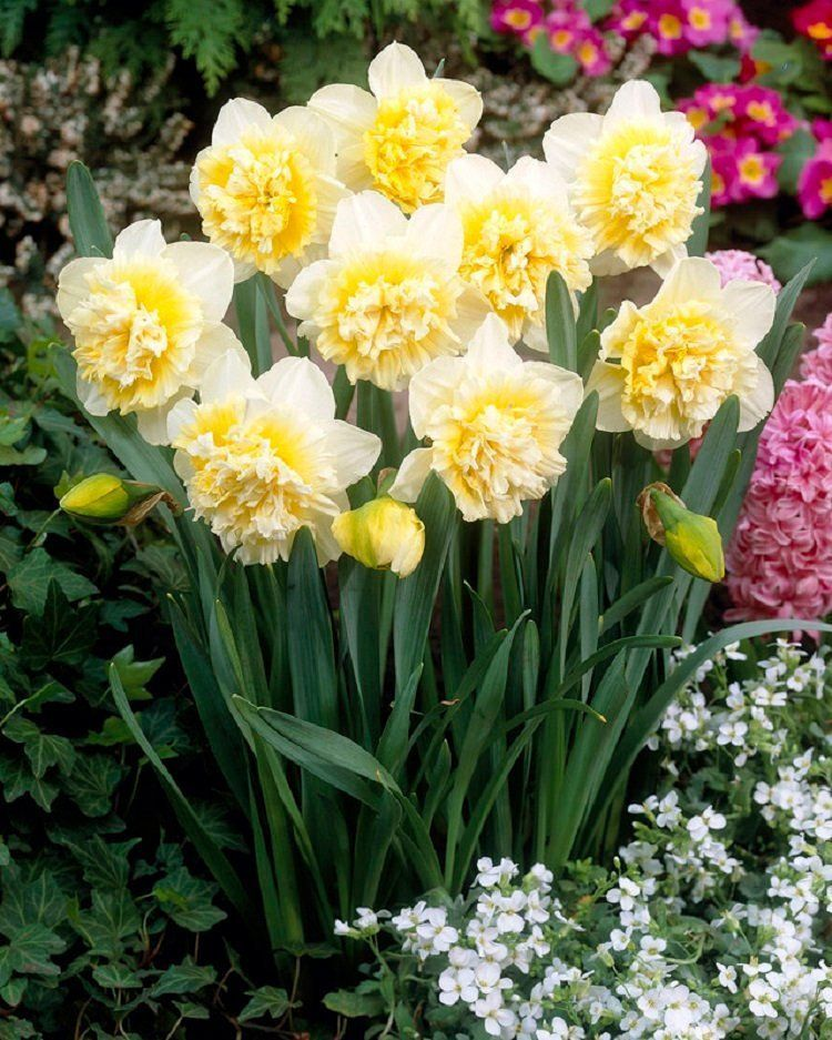 yellow spring flowers from bulbs