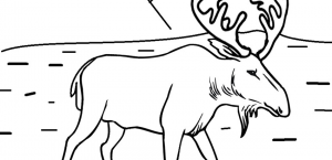 Animal Coloring Pages | Cool2bKids - Part 2