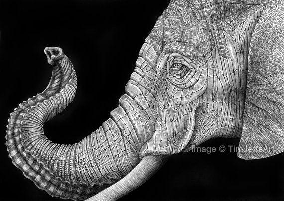 Elefante africano tinta de dibujo