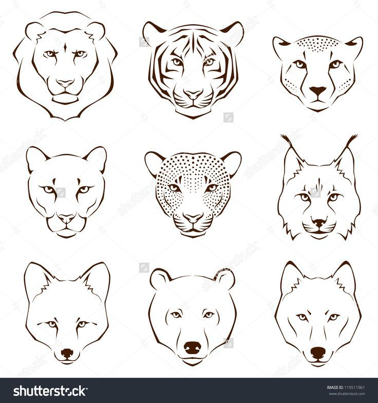 Coloring Page Animal Face Drawing Tiger Tattoo Simple Coloring Page
