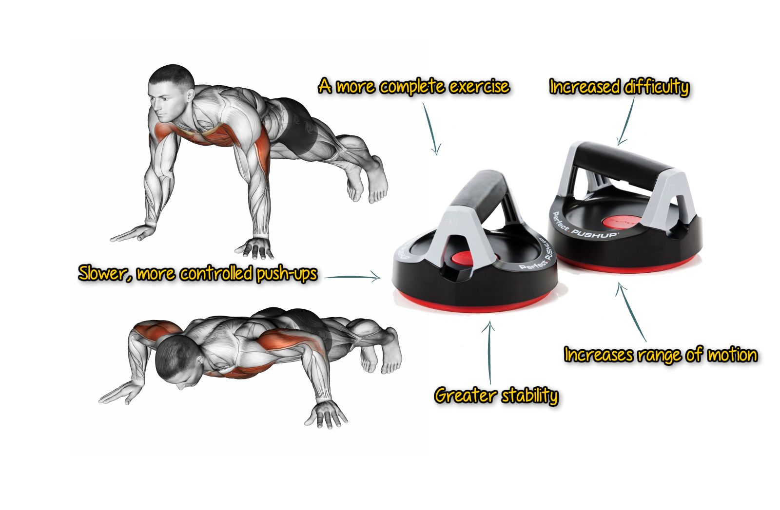 The Perfect Pushup Workout (With images) Perfect pushup