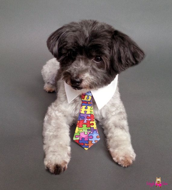 Amazing Dog Collar Bow Adorable Dog - 266f73eb73cb7e891ea947b9637941fa  Picture_234686  .jpg