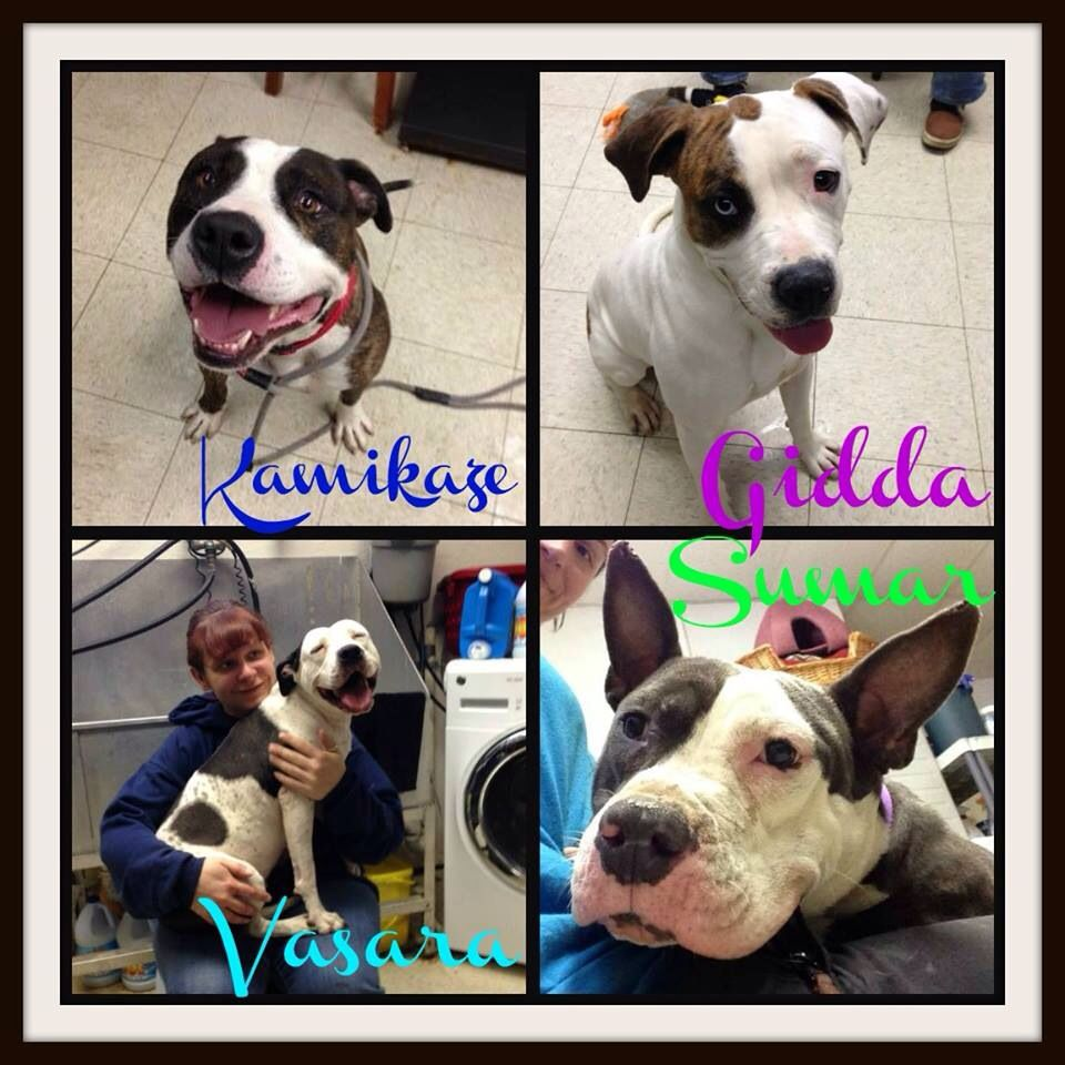 URGENT IN CLEVELAND OH K