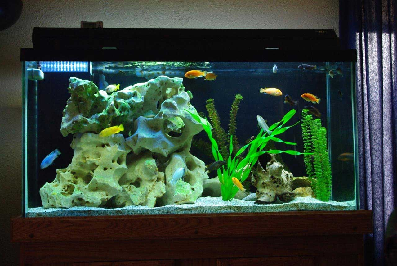 Decorating Your Fish Tank With Beautiful Design Ideas.