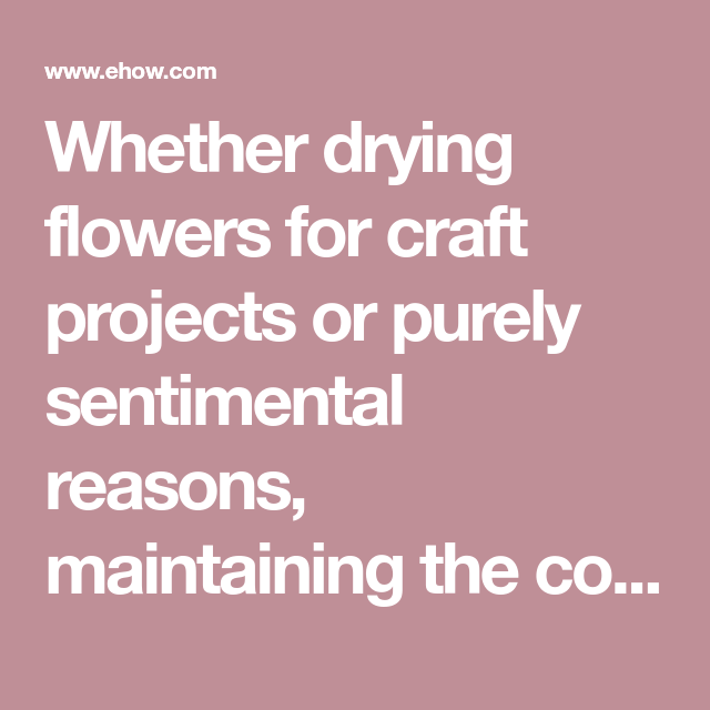 Whether drying flowers for craft projects or purely ...