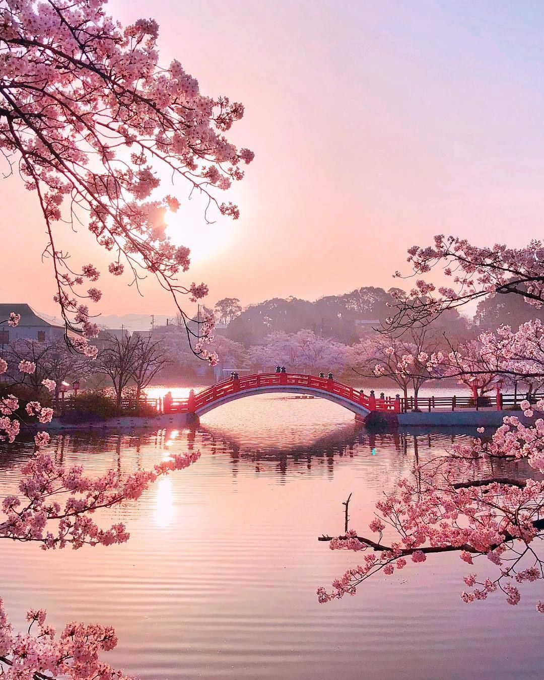 Pink Petals under a Japanese Sun (With images) Nature