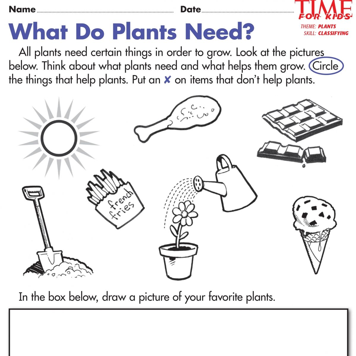 Plant Worksheets For Kindergarten
