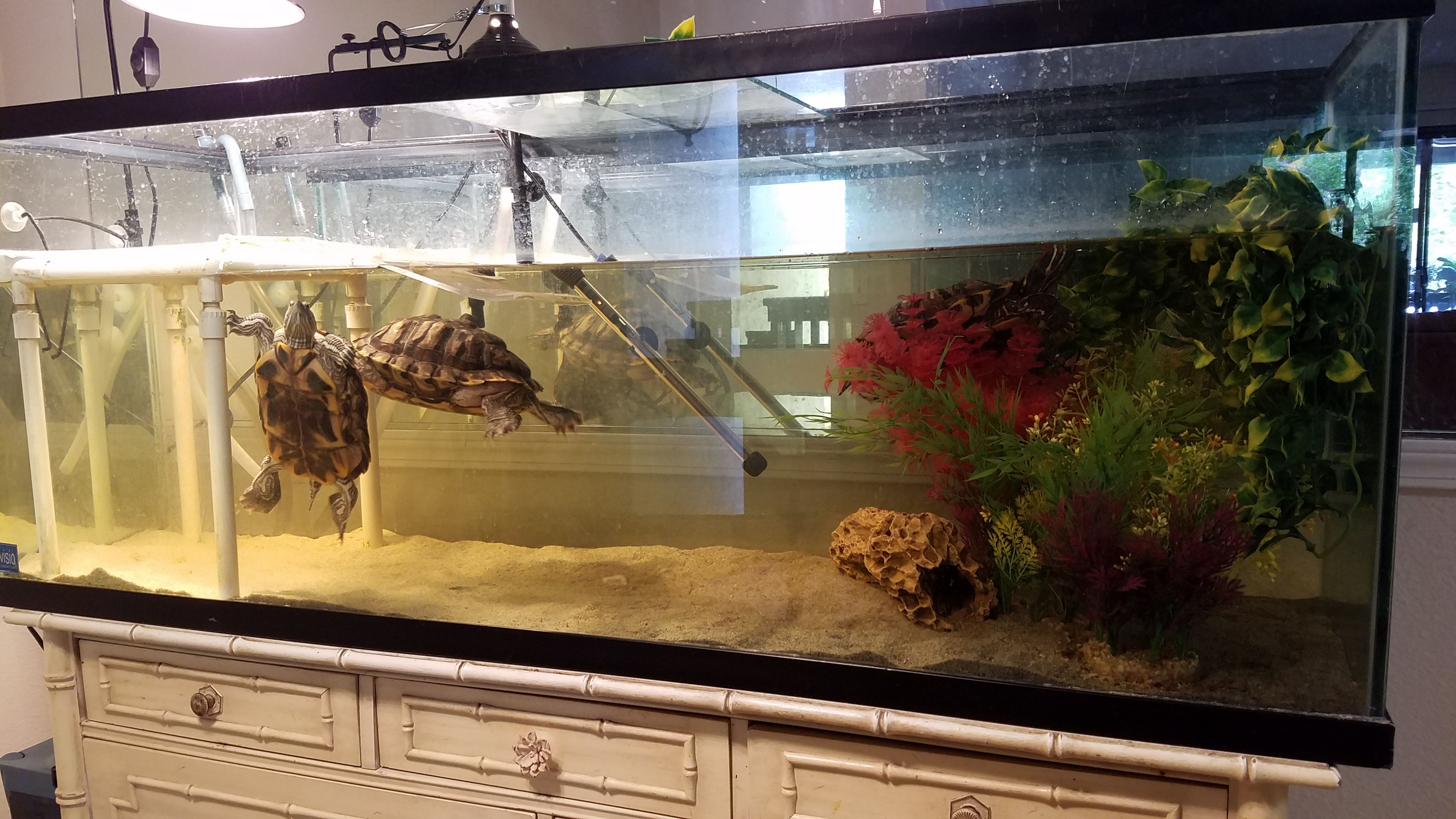 red ear slider turtle aquarium 125 gallons