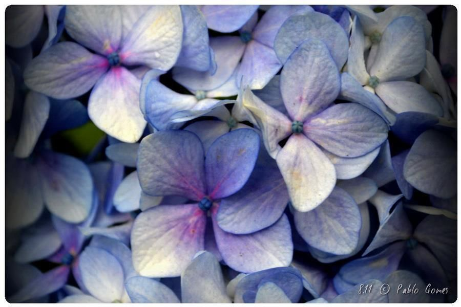 [2011 - Leça da Palmeira - Portugal] #fotografias #flor #flores #flower #flowers