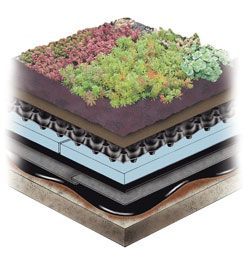 example extensive green roof assembly