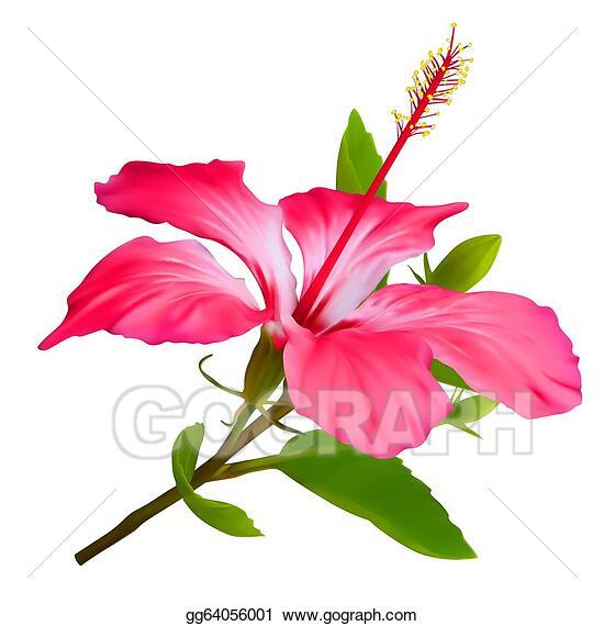 Vector Stock Flower Hibiscus Hawaiian Aloha Tropical Plant Clipart Illustration Gg64056001 Gograph In 2020 Tropical Plants Stock Flower Flowers