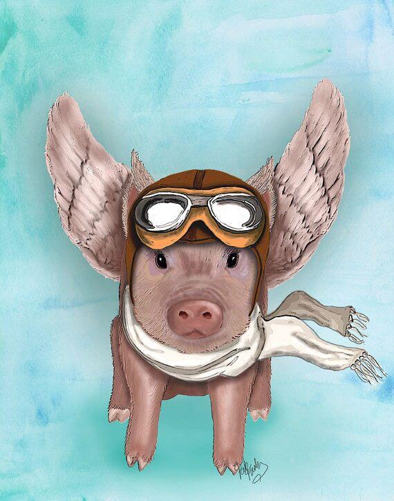 Aviator Pig