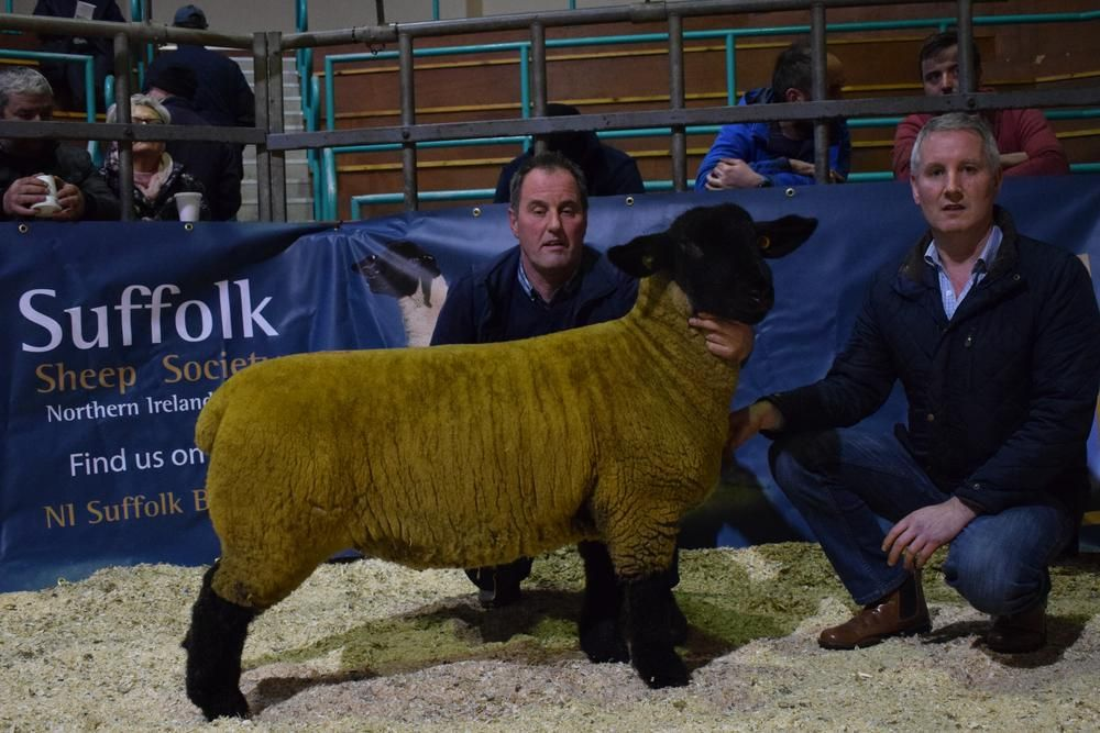 SUFFOLK females were in strong demand at the annual show