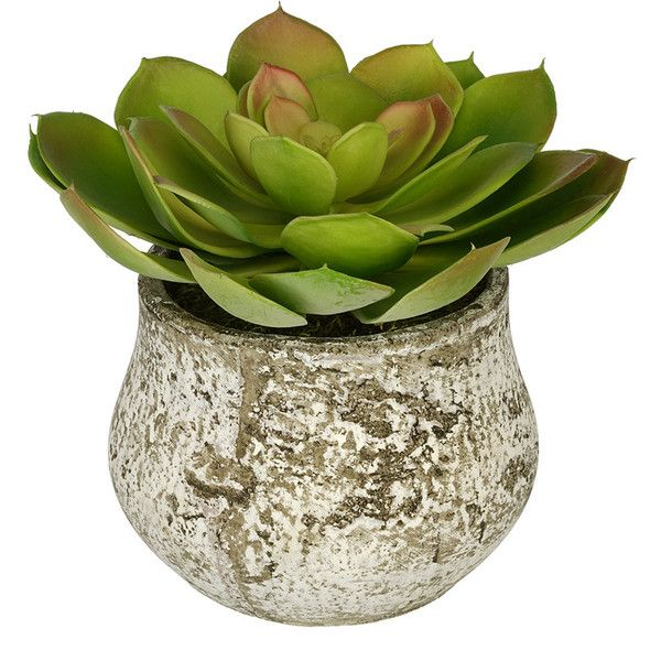 Artificial Echevaria Succulent Desk Top Plant in Decorative Vase... found on Polyvore featuring home, home decor, floral decor, artificial indoor plants and fake indoor plants