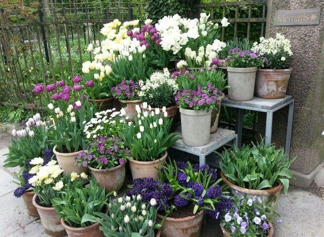 Flower Pot Arrangement At Claus Dalby 39 S Garden Arrangement Claus Dalby39s Flower G Garten Topfgarten Vorgarten