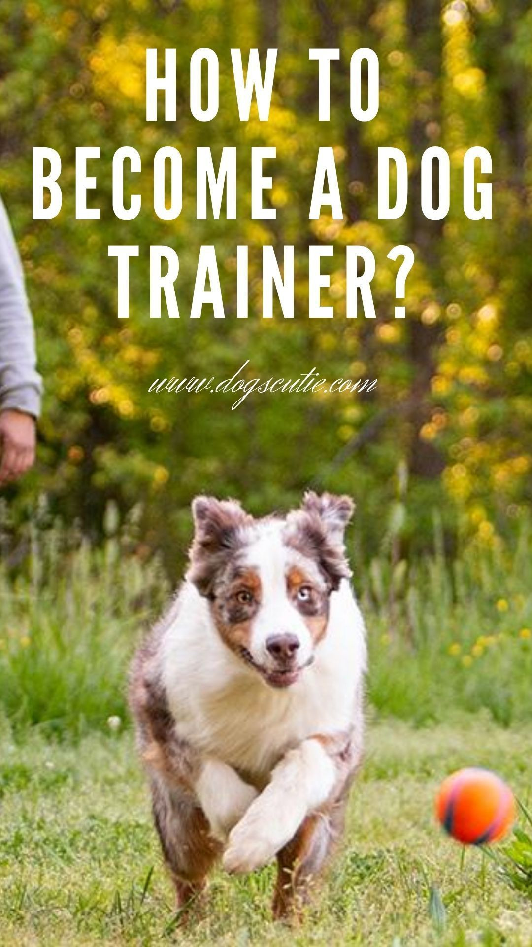 How To Become A Dog Trainer In 2020 Become A Dog Trainer Dogs Dog Trainer