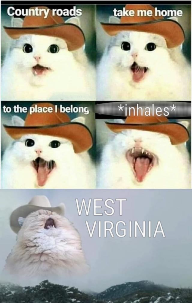 Take Me Home Country Roads Cat Meme