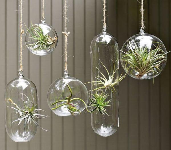 Hängende Terrarien bepflanzen ideen Glas Kugel Indoor Garten Ideen - indoor garten wohlfuhloase wohnung begrunen