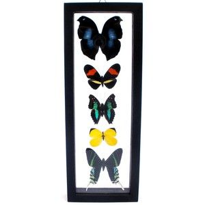 Five Framed Butterflies VII, $146, now featured on Fab. Napeocles Jucunda, Heliconius Erato, Doxocopa Laurentia, Eurema Reticulata and Urania Leilus