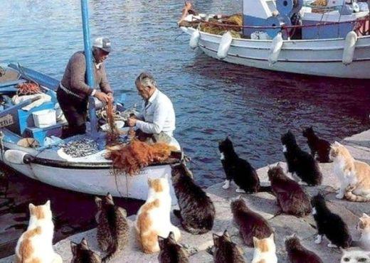 「猫の島」に行ってみたい!猫が人間よりエラい宮城県「田代島」について調べてみた | nanapi [ナナピ]