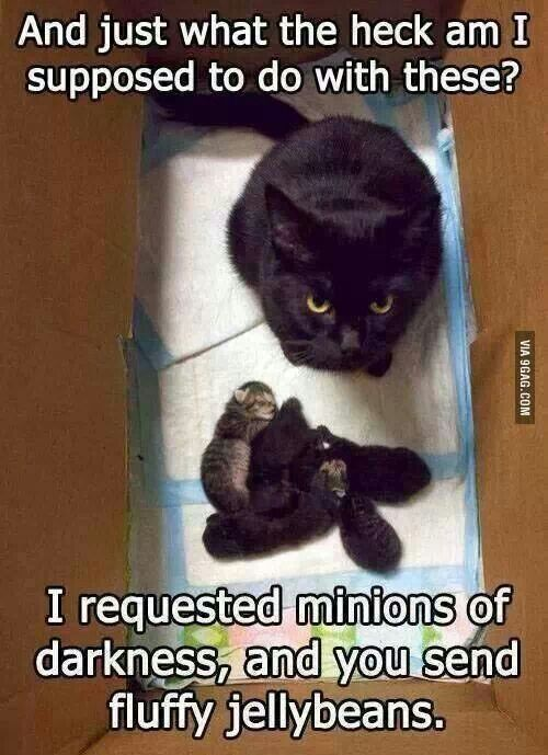 """I requested minions of darkness"" . . . I would expect that coming from a cat."