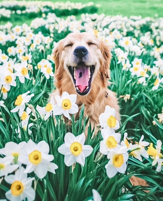 April Showers Bring Dogs With Flowers - DIY Darlin'
