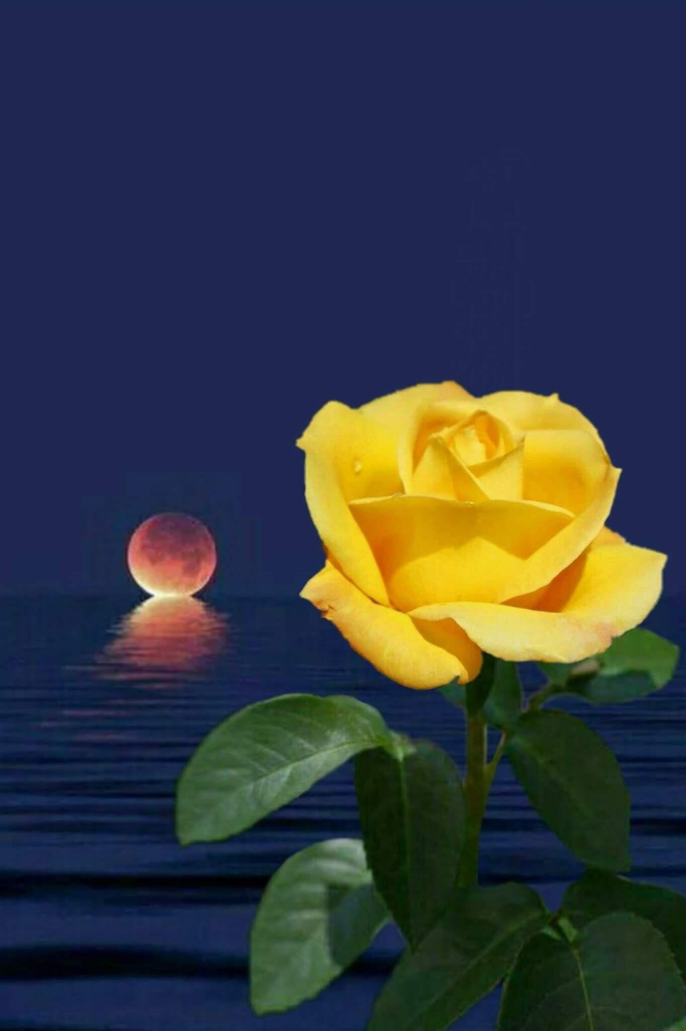 Ahmet krt  Blumen rosen, Blumen, Schöne bilder