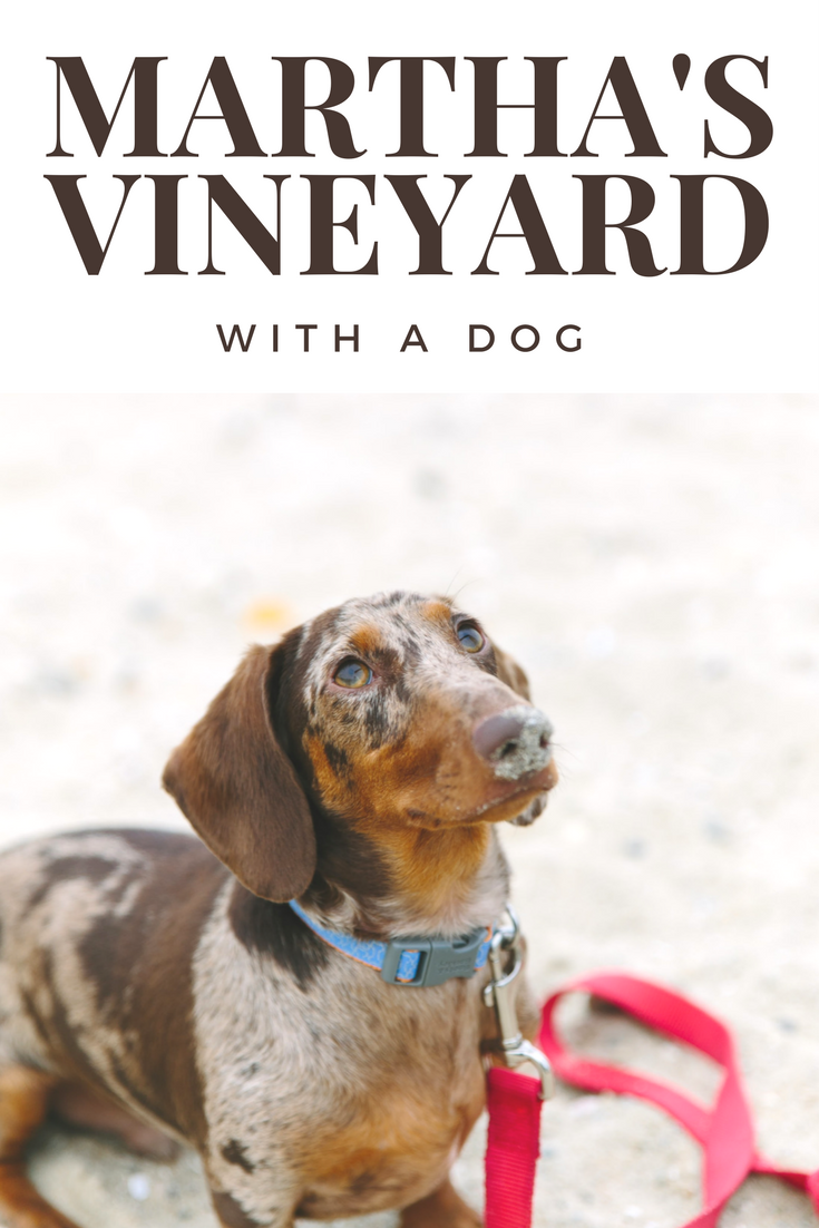 We Went There: Martha\'s Vineyard | Dog friendly hotels, Dog travel ...