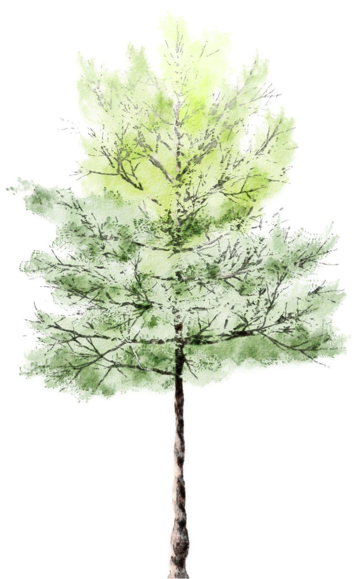 watercolor tree | pretty | Pinterest | Watercolor trees, Watercolor ...