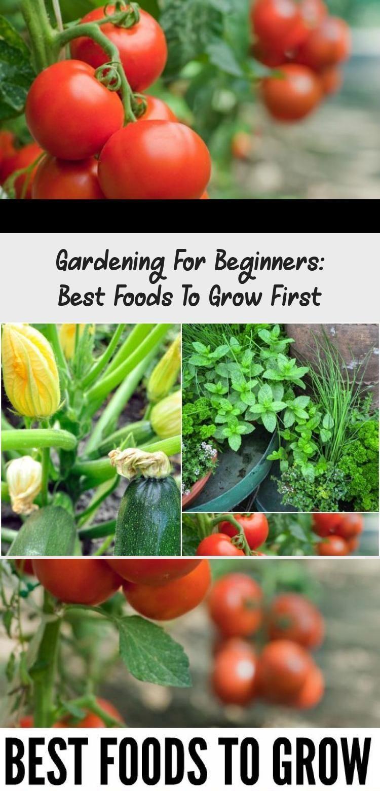 Gardening For Beginners Best Foods To