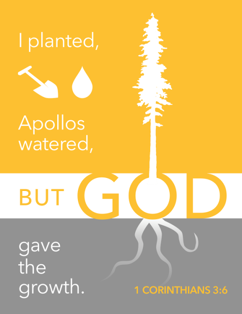 Image result for i planted apollo watered