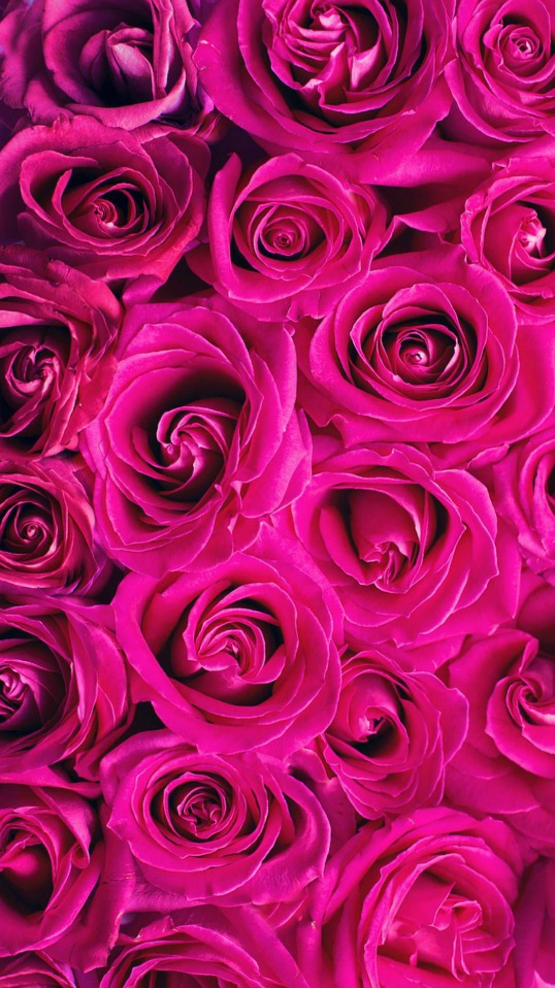 Hot Pink Pinklips Pink Wallpaper Iphone Pink Roses Background