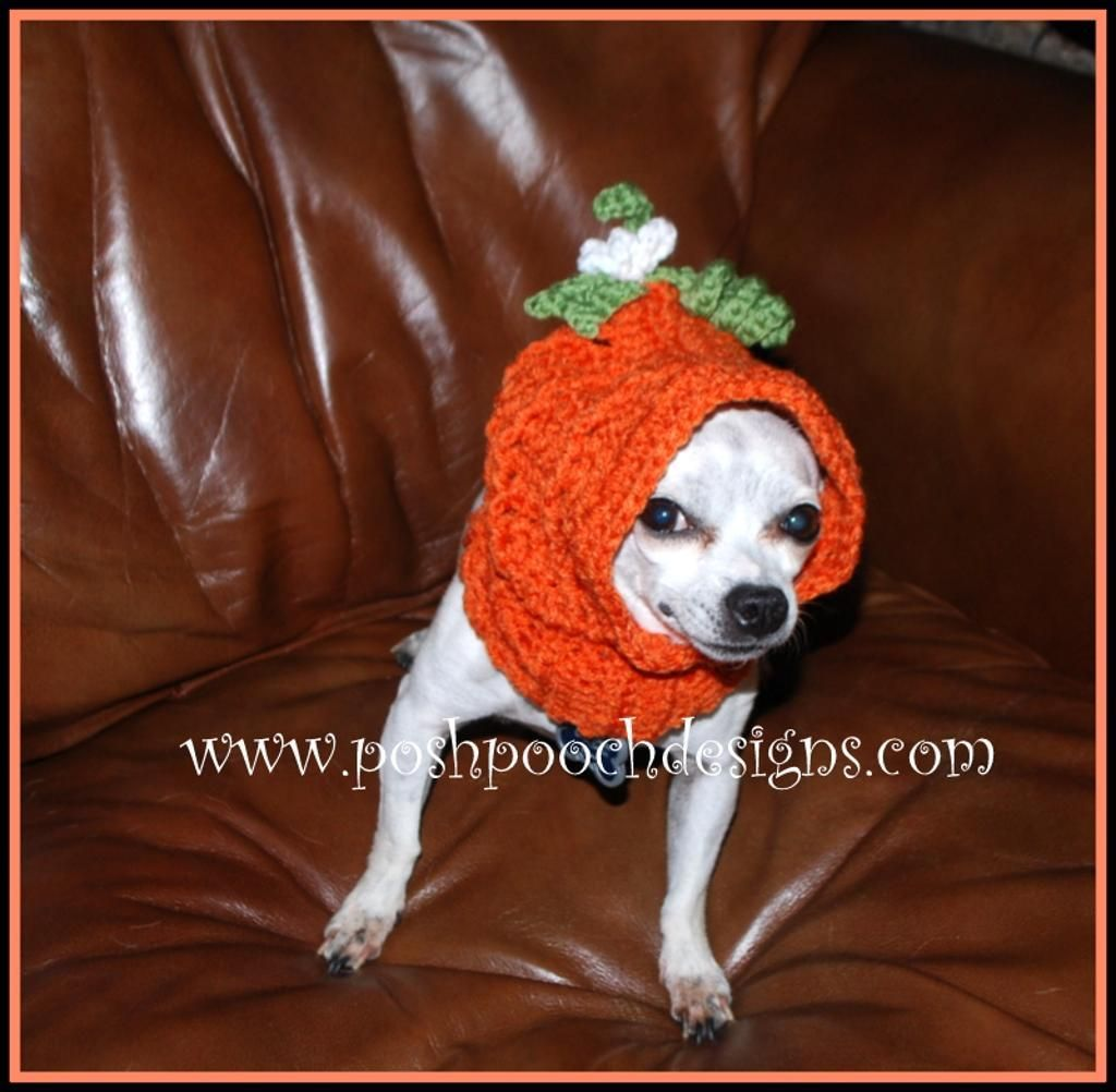 Pumpkin dog snood for small dogs dog snood snood and crochet pet 4 name crocheting pumpkin dog snood for small dogs bankloansurffo Images