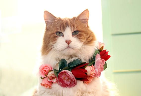 Pink rose cat flower collar cat flower crown kitten flower its a pink rose cat flower collar cat flower crown kitten flower junglespirit Images