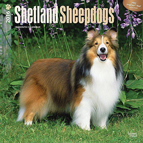 Shetland Sheepdogs 2016 Wall Calendar, http://www.amazon.com/dp/B013DFAKU8/ref=cm_sw_r_pi_awdm_ia-fwb1K9VQEZ