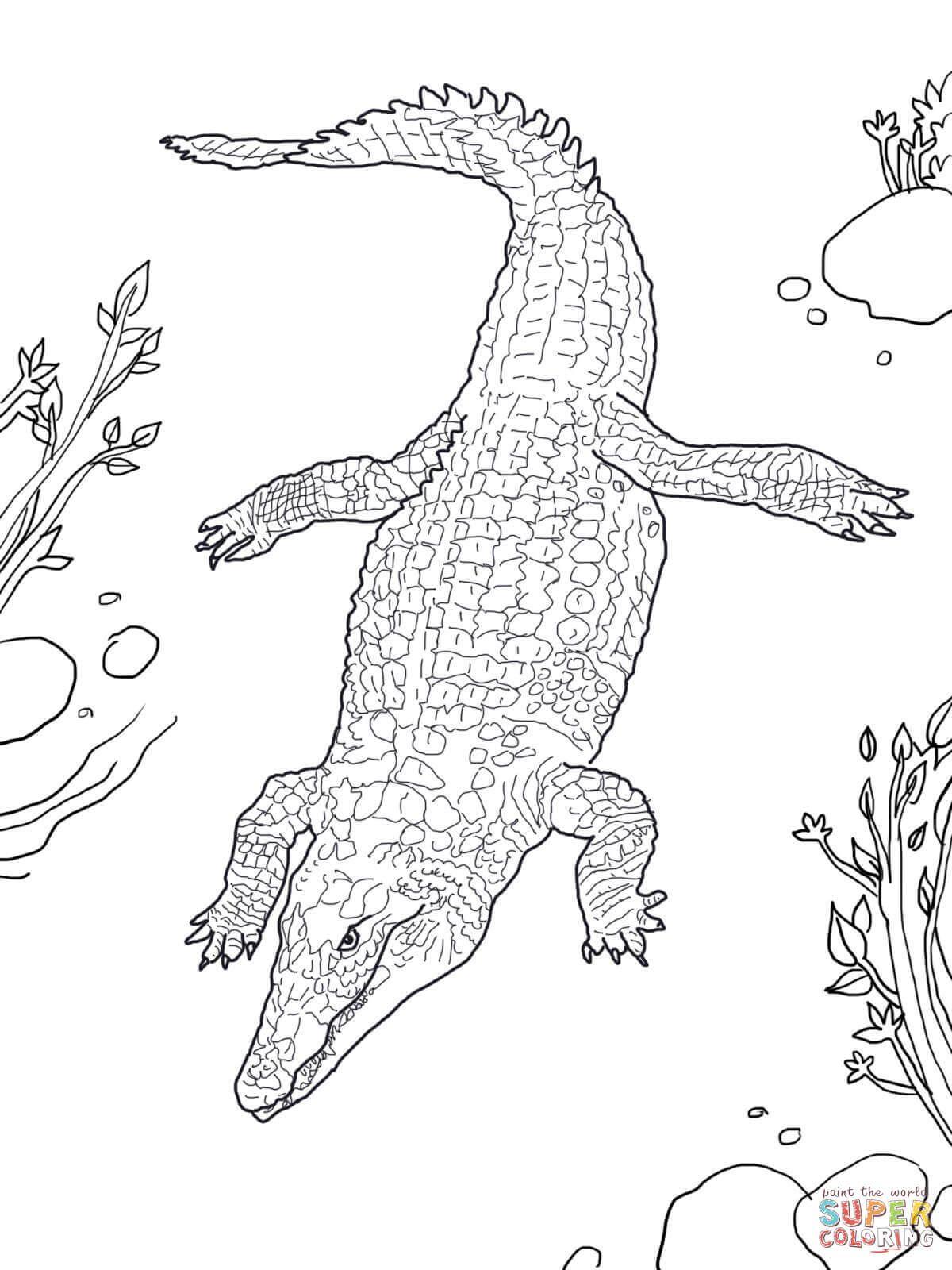 Nile Crocodile Super Coloring Nile Crocodile Draw On Photos