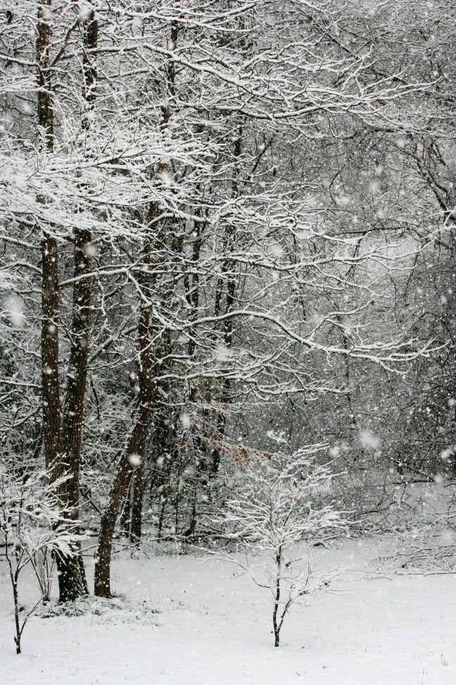 Louisiana snow