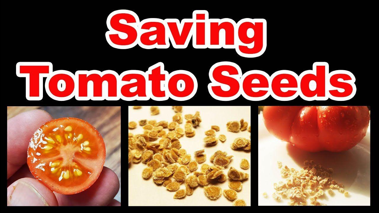 26787b4d9eed4b1eb67dbd783d690cc4 - Gardeners World Magazine Free Tomato Seeds