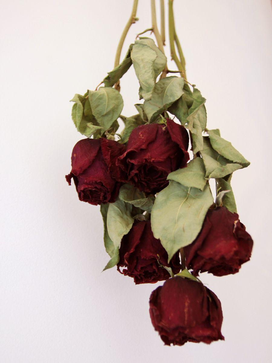 薔薇のドライフラワー&ワークショップ   代々木上原のアトリエで ... 初のドライフラワーは大成功でした! 色見もあり、いい感じの雰囲気が出てますね。 そして、幸せの赤い薔薇がいつも身近で感じられて嬉しいです~♪