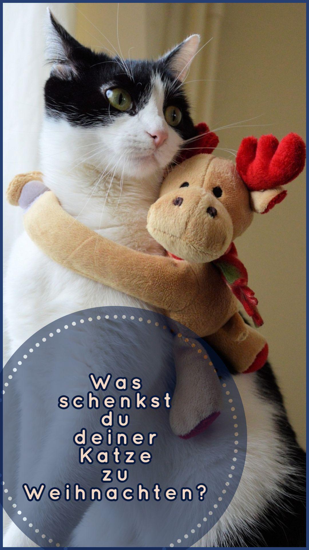 Wunderbare Weihnachtsgeschenke Für Katzen Katzen Cats Crochet Hats