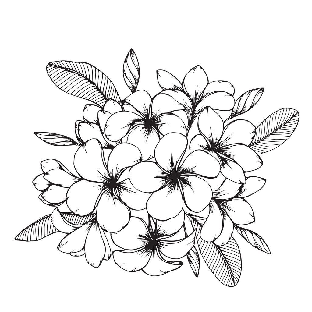 Untitled Plumeria Flower Tattoos Flower Drawing Hawaiian