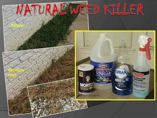NATURAL WEED KILLER Pour 1 4 Salt Into Bottom Of Spray Bottle Squirt Approx