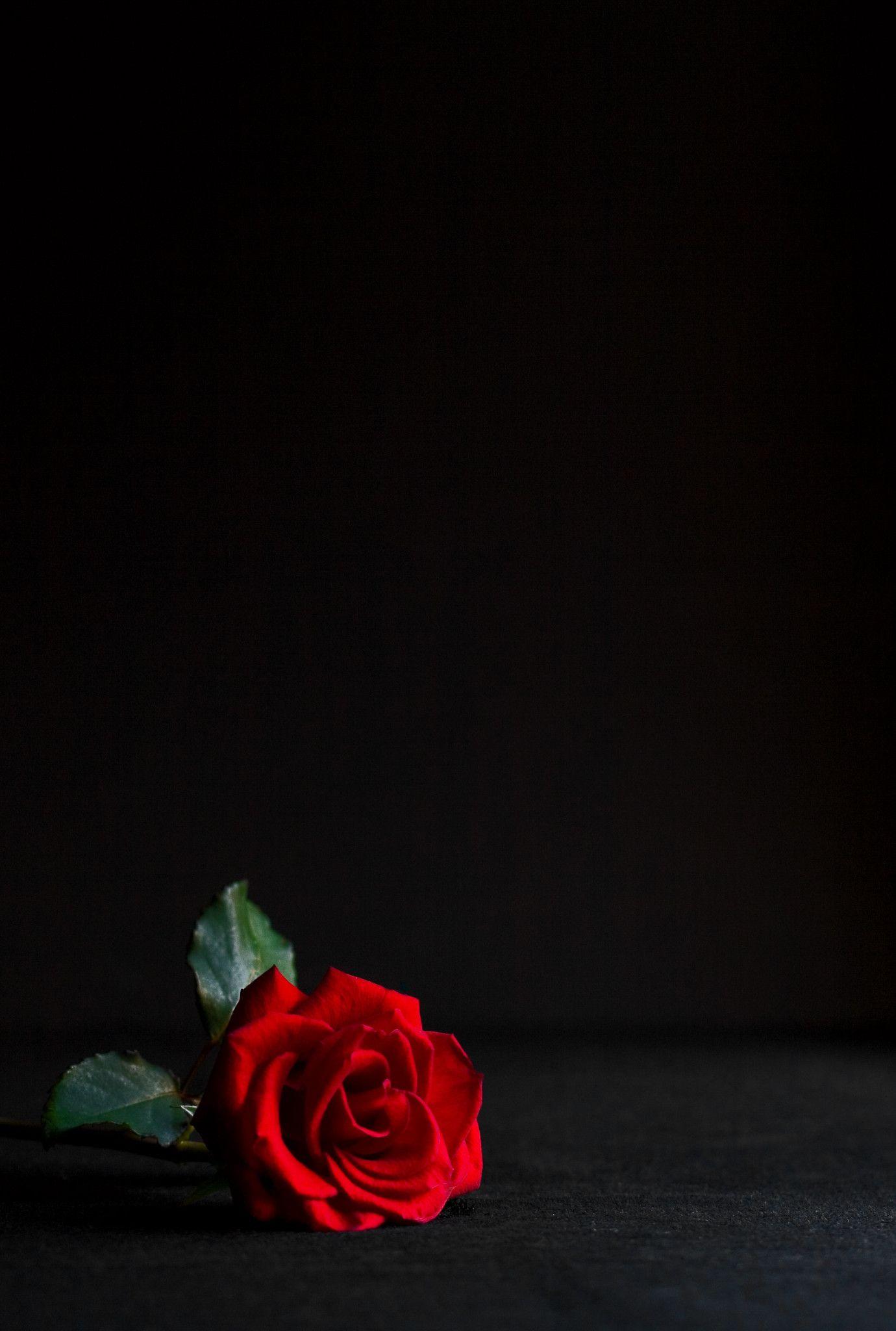 One Rose Di 2020 Doodle Bunga Mawar Cantik Seni Abstrak