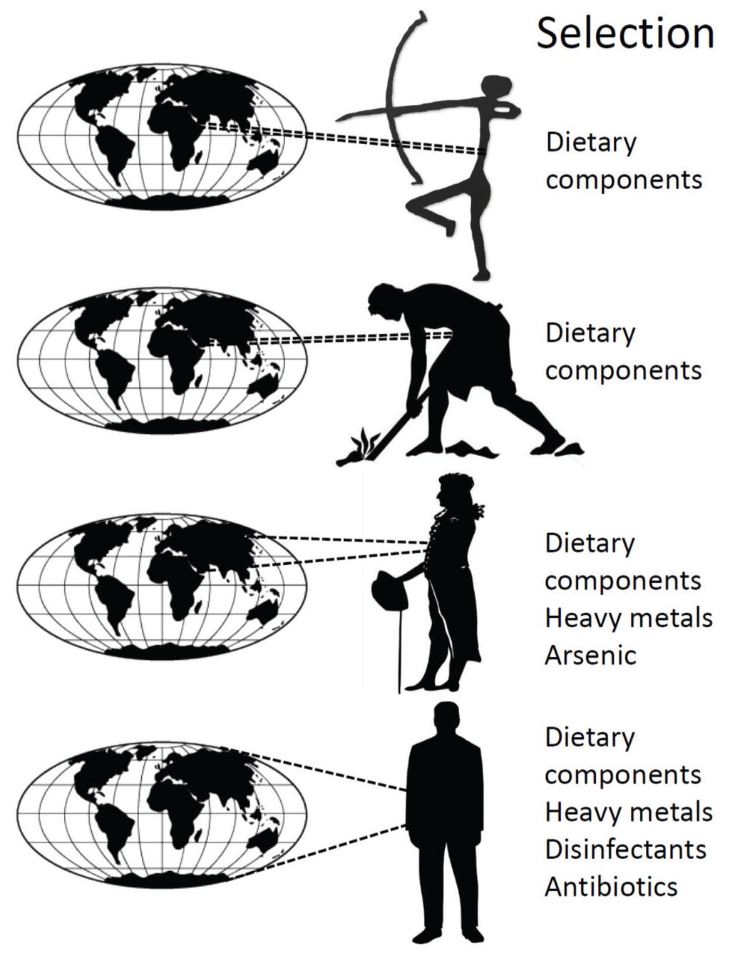 Ecology and Evolution of the Human Microbiota: Fire