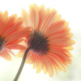 Tangerine Dream - Peter Baumgarten