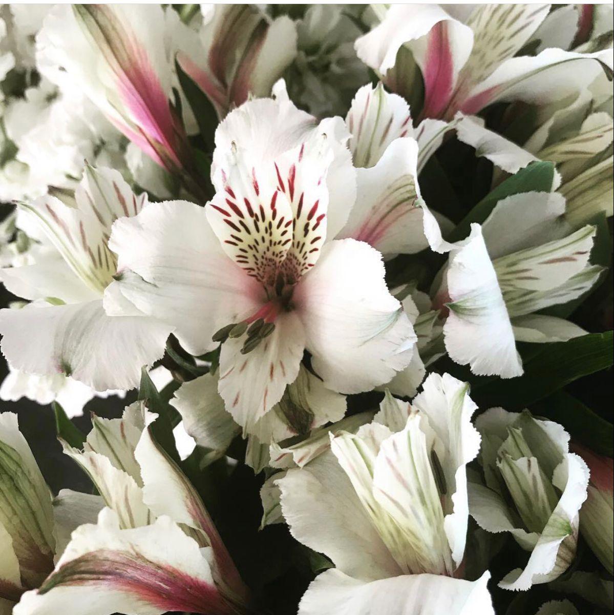 Wholesale White Alstroemeria Flower In 2020 Alstroemeria Wholesale Fresh Flowers Flowers