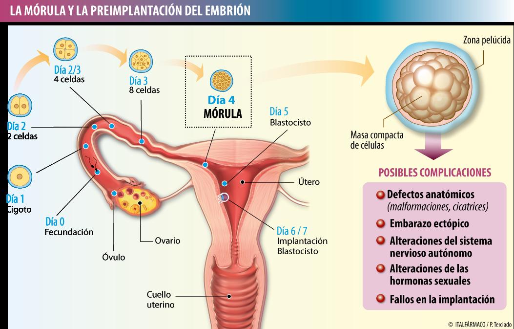 Pin En Embarazo