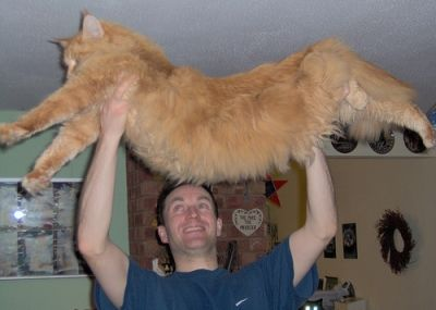 Maine coon longest cat