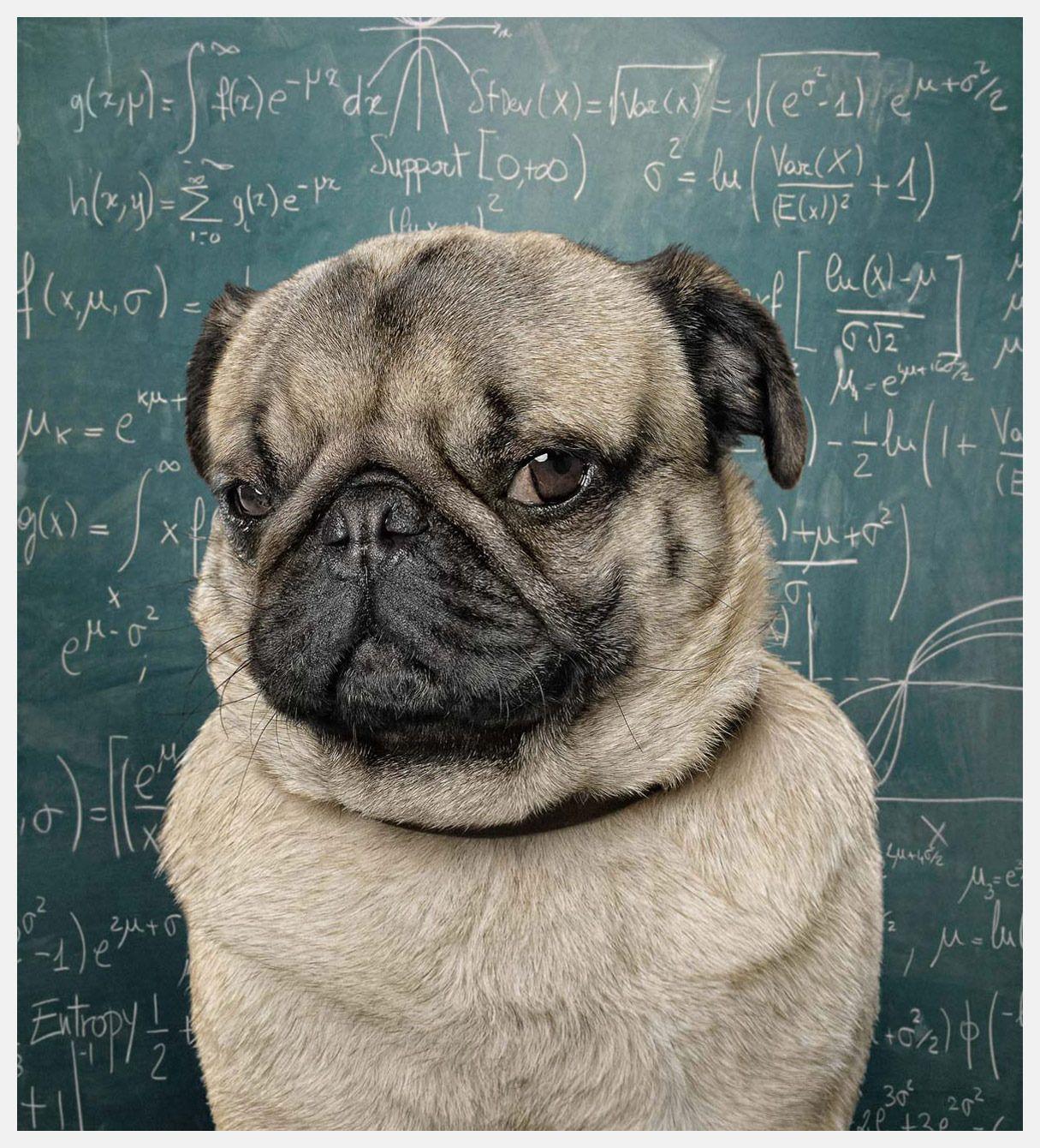 Pug Chalkboard Pugs Cute Pugs